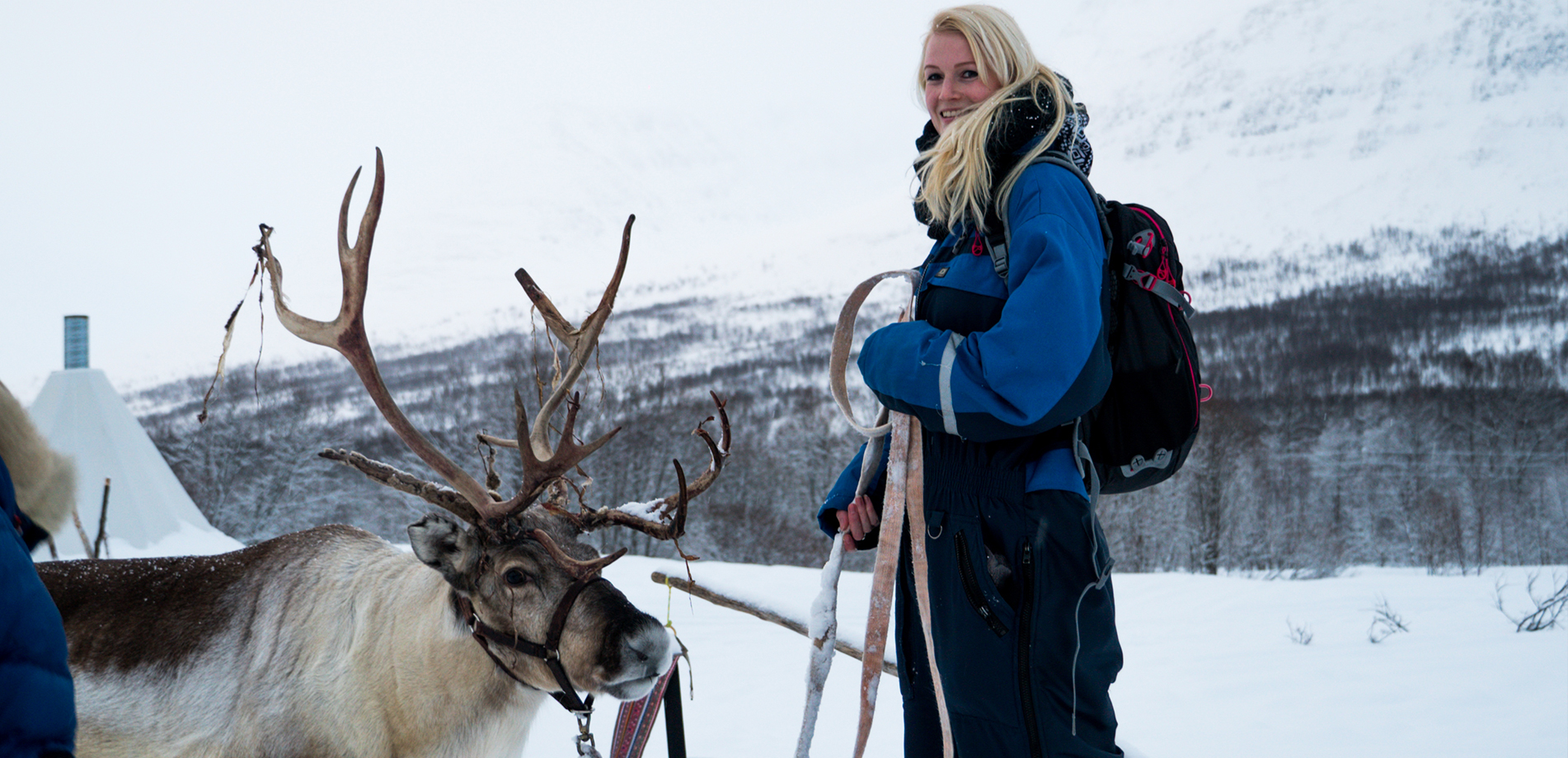 Reindeer sledding Lyngsfjord Adventure Norway