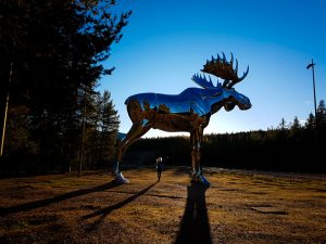 Vakantie Noorwegen - De gigantische eland in Bjøråa