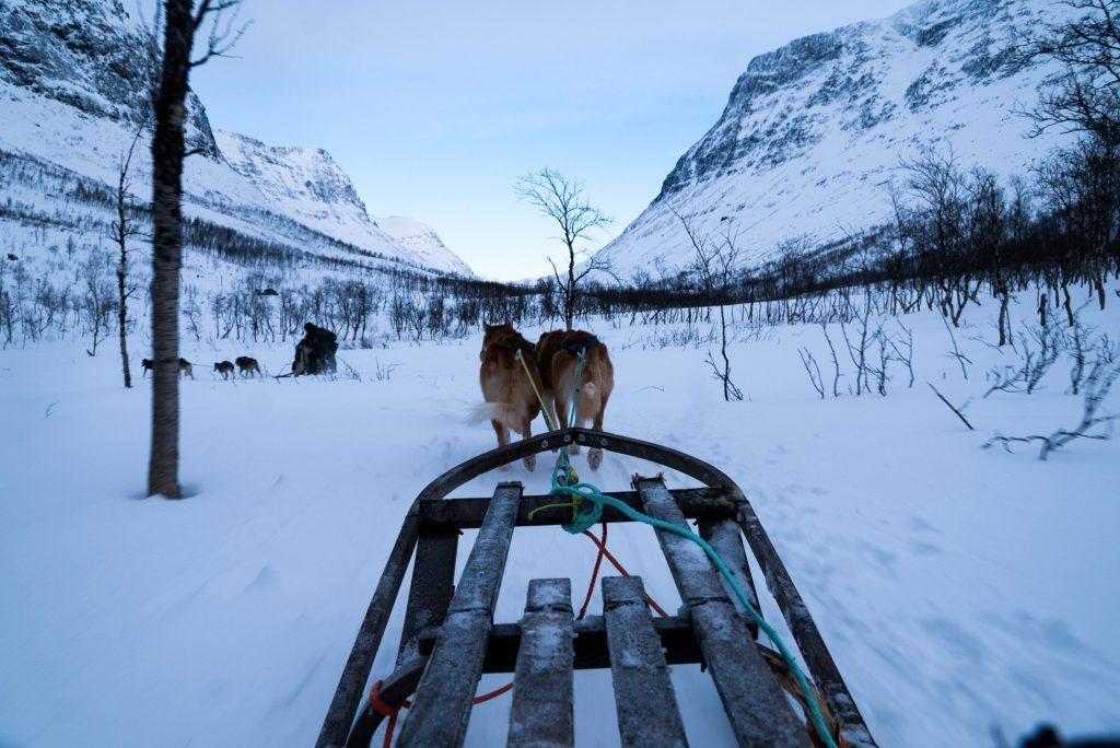 Hondensledetocht door Signaldalen, Noorwegen
