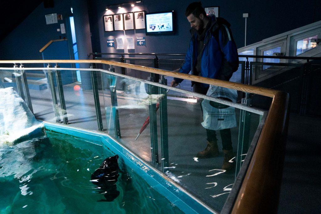 Zeehondjes in Polaria aquarium, Tromsø