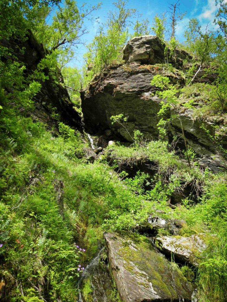 Biodiversiteit in Aurlandsdalen