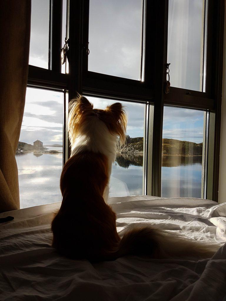 Bijkomen op de hotelkamer in Noorwegen met je hond