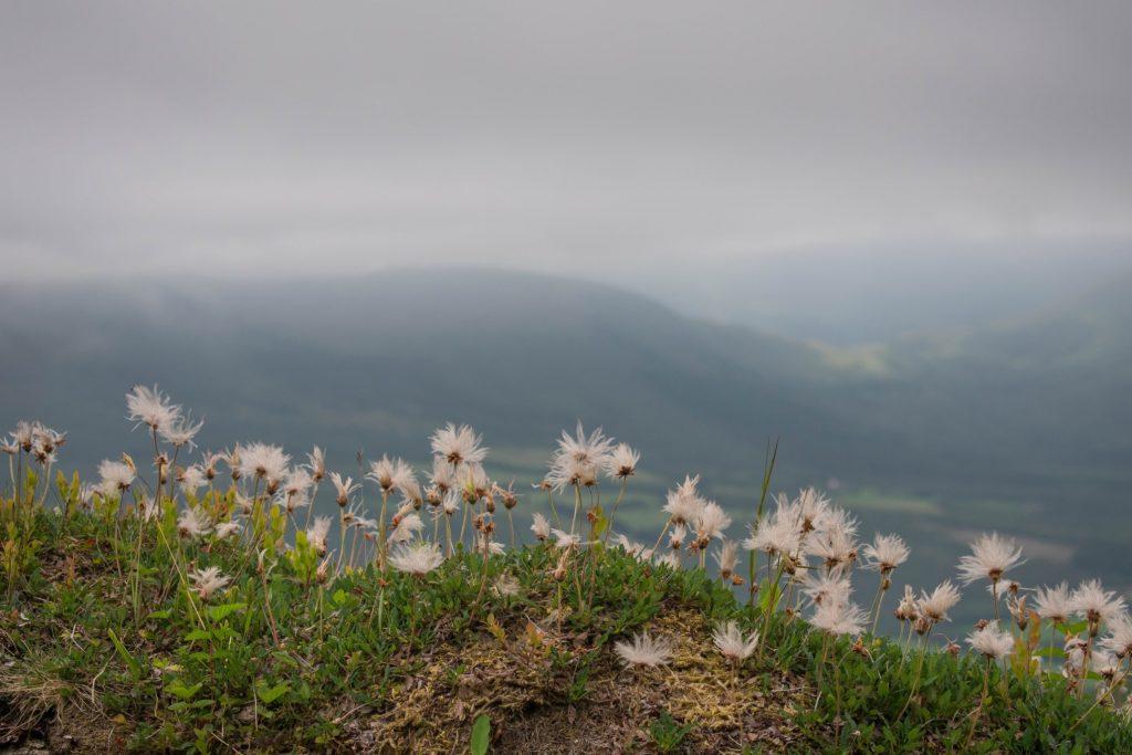 Bijzondere plantensoorten in natuurreservaat Trollkirkedalen Noorwegen