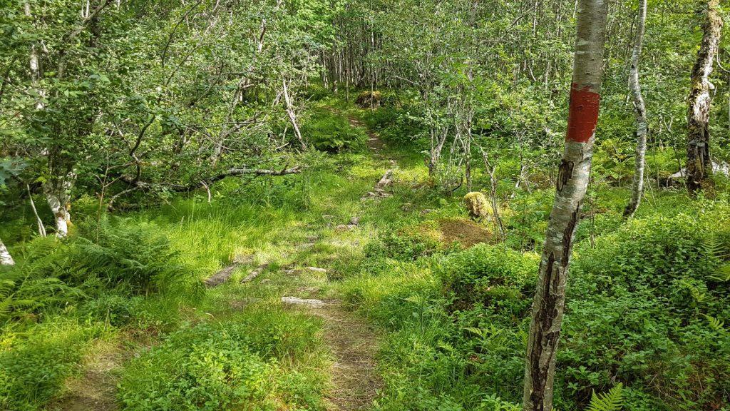 Het wandelpad van de Eiafossen wandeling