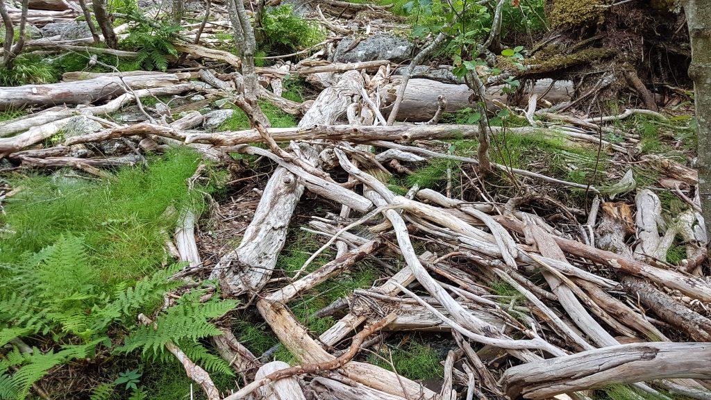 Aangespoeld hout tijdens de Eiafossen wandeling