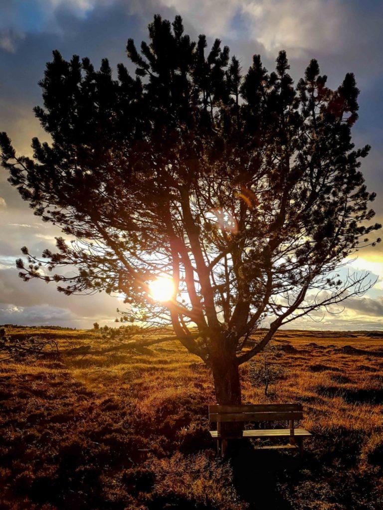 Een bankje bij een verdwaalde boom in Maurdalen rond golden hour