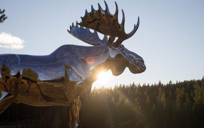 Storelgen, de grote eland in fjord-Noorwegen