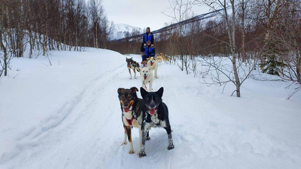 Op de hondenslee in Tamokdalen bij Tromsø Ice Domes