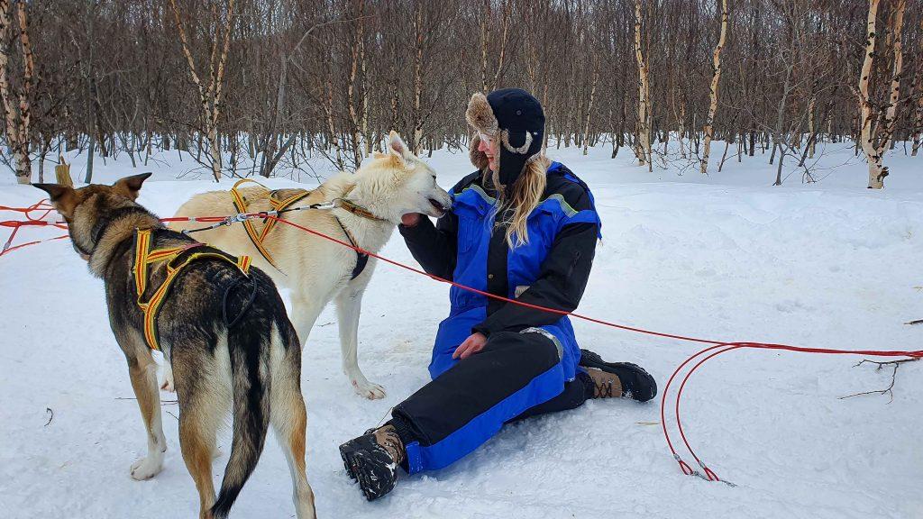 Huskies kroelen bij Tromsø Ice Domes