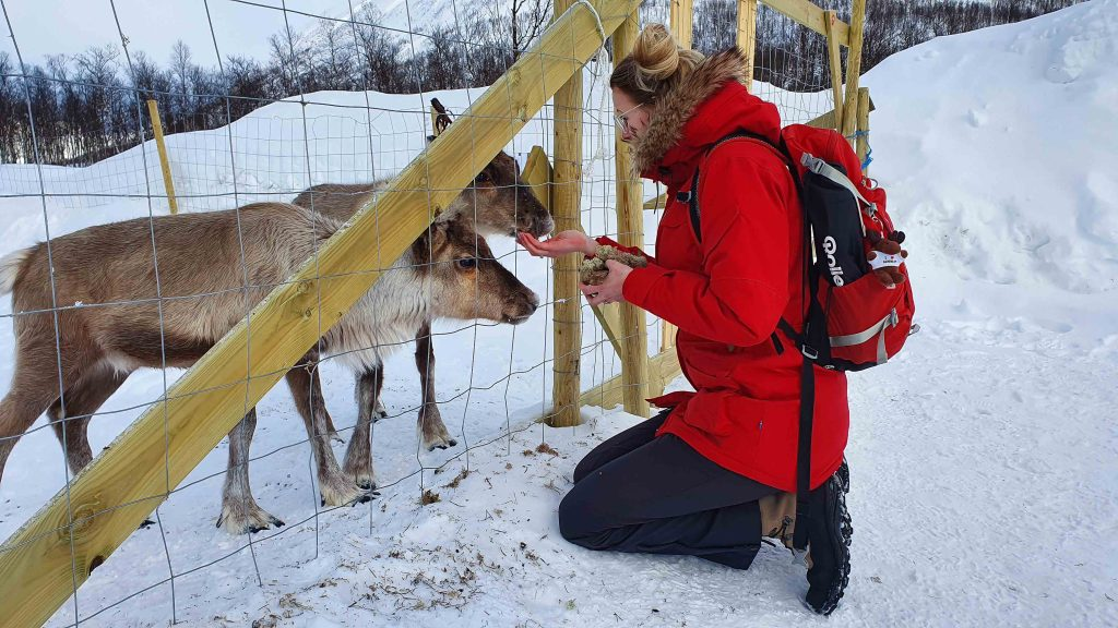 Baby rendieren voeren bij Tromsø Ice Domes